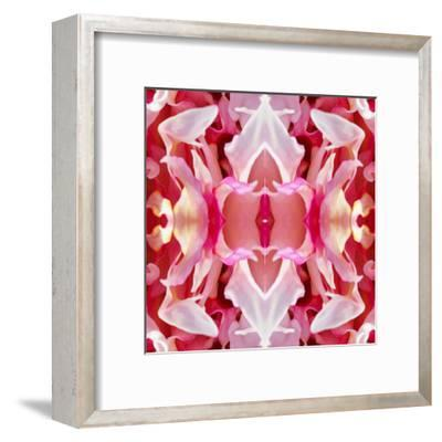 Peony Wings-Rose Anne Colavito-Framed Art Print