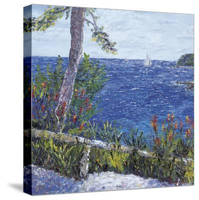 Les Aloes du Cap-Tania Forgione-Stretched Canvas Print