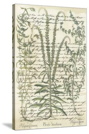 Botanical Memoir II-Stephanie Monahan-Stretched Canvas Print
