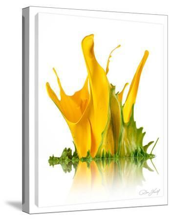 Yellow Cala Lillies-Don Farrall-Stretched Canvas Print