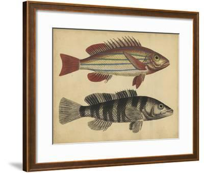 Species of Fish III-Friedrich Strack-Framed Giclee Print
