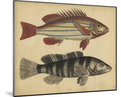 Species of Fish III-Friedrich Strack-Mounted Giclee Print