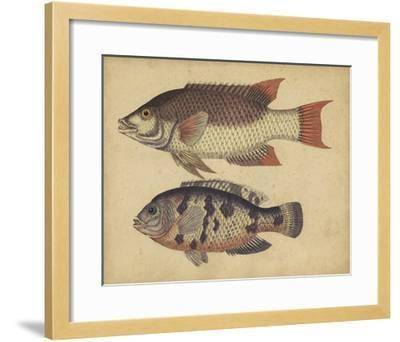 Species of Fish IV-Friedrich Strack-Framed Giclee Print