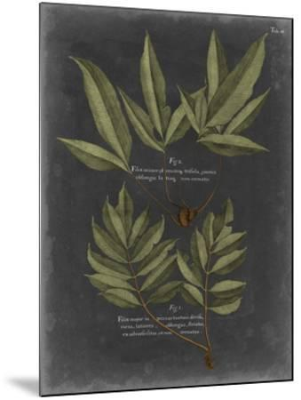 Foliage Dramatique IV-Vision Studio-Mounted Giclee Print