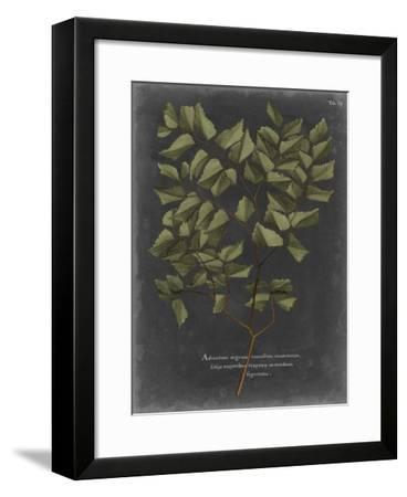 Foliage Dramatique V-Vision Studio-Framed Giclee Print