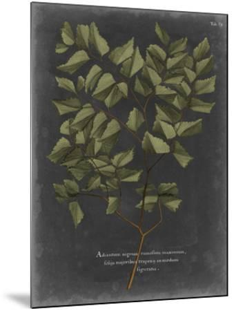 Foliage Dramatique V-Vision Studio-Mounted Giclee Print