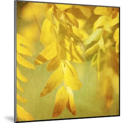 Autumn Photography II-Sylvia Coomes-Mounted Art Print