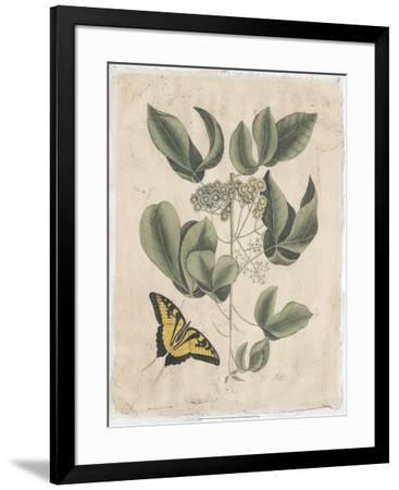Embellished Catesby Butterfly & Botanical II-Mark Catesby-Framed Art Print