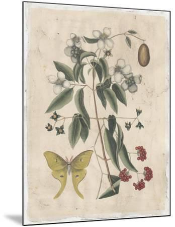 Embellished Catesby Butterfly & Botanical III-Mark Catesby-Mounted Art Print