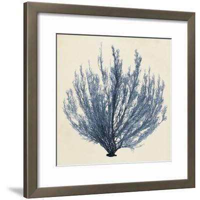 Coastal Seaweed III-Vision Studio-Framed Giclee Print