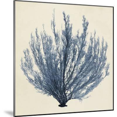 Coastal Seaweed III-Vision Studio-Mounted Giclee Print