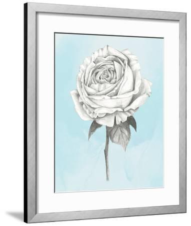Graphite Rose IV-Grace Popp-Framed Art Print