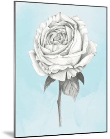 Graphite Rose IV-Grace Popp-Mounted Art Print