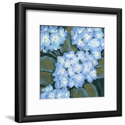 Blue Hydrangeas I-Tim OToole-Framed Art Print