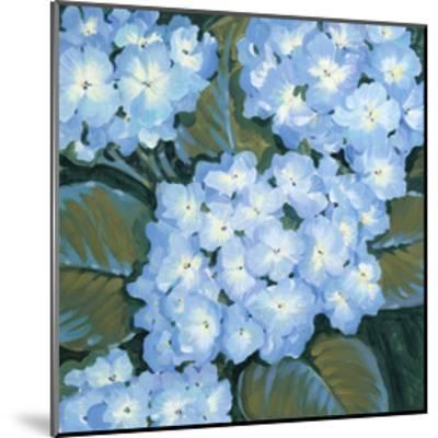 Blue Hydrangeas I-Tim OToole-Mounted Art Print
