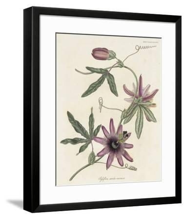 Lavender Blooms II-Unknown-Framed Giclee Print