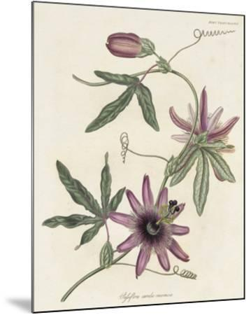 Lavender Blooms II-Unknown-Mounted Giclee Print