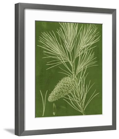 Modern Pine V-Vision Studio-Framed Giclee Print