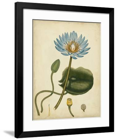 Blue Water Lily-Henry Andrews-Framed Giclee Print