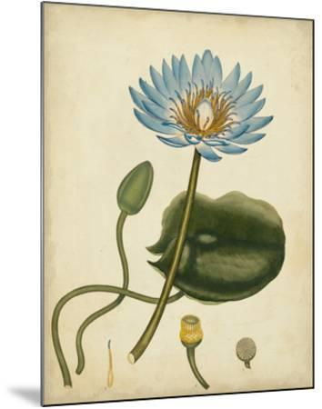Blue Water Lily-Henry Andrews-Mounted Giclee Print