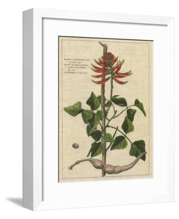 Botanical Study on Linen IV-Vision Studio-Framed Giclee Print