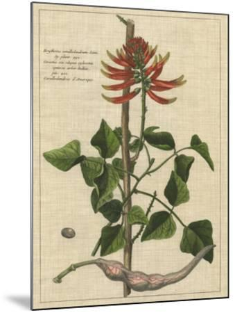 Botanical Study on Linen IV-Vision Studio-Mounted Giclee Print
