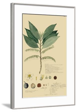Tropical Descubes III-A^ Descubes-Framed Giclee Print