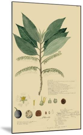 Tropical Descubes III-A^ Descubes-Mounted Giclee Print