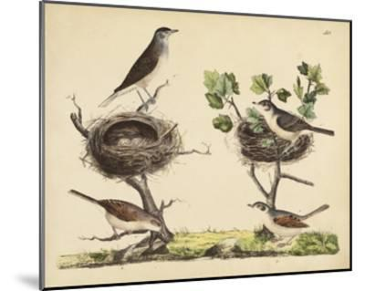 Wrens, Warblers & Nests I-Friedrich Strack-Mounted Giclee Print