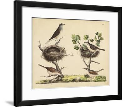 Wrens, Warblers & Nests I-Friedrich Strack-Framed Giclee Print