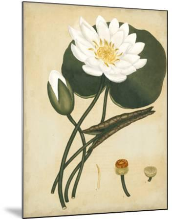 White Water Lily-Henry Andrews-Mounted Giclee Print