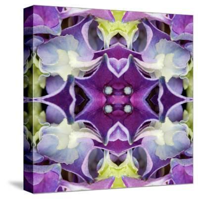 Hydrangea-Rose Anne Colavito-Stretched Canvas Print
