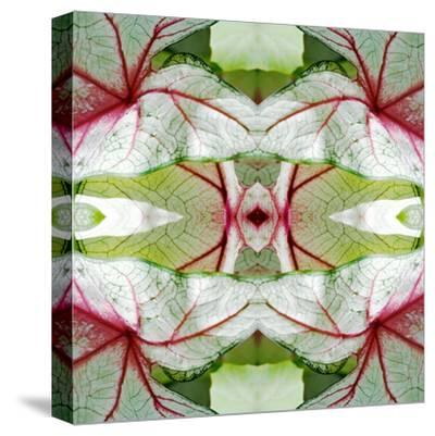 Red Green Caladium-Rose Anne Colavito-Stretched Canvas Print