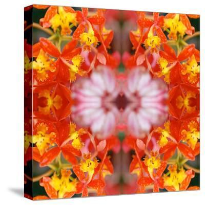 Yellow Orchids-Rose Anne Colavito-Stretched Canvas Print