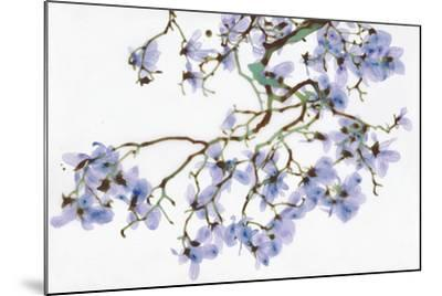 Pale Azure-Jackie Battenfield-Mounted Giclee Print