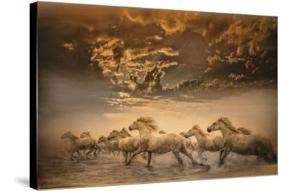 Flying Manes-Bobbie Goodrich-Stretched Canvas Print