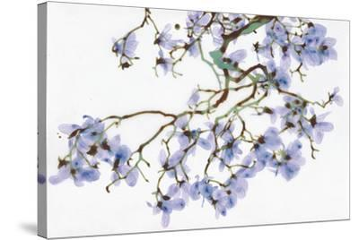 Pale Azure-Jackie Battenfield-Stretched Canvas Print