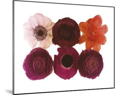 Colour Cluster I-Katja Marzahn-Mounted Giclee Print