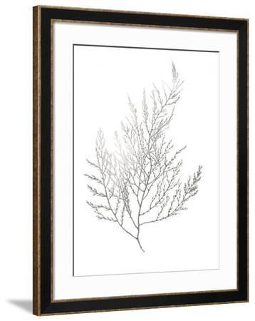 Silver Foil Algae II-Jennifer Goldberger-Framed Art Print