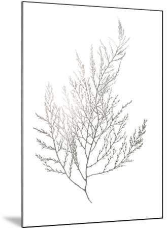 Silver Foil Algae II-Jennifer Goldberger-Mounted Art Print