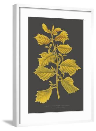 Trees & Leaves V-Vision Studio-Framed Giclee Print