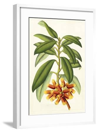 Tropical Rhododendron I-Horto Van Houtteano-Framed Giclee Print