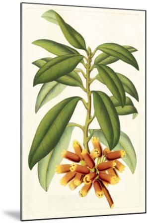 Tropical Rhododendron I-Horto Van Houtteano-Mounted Giclee Print