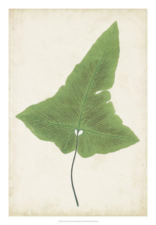 Fern Family I-Lowe-Framed Giclee Print
