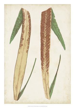 Fern Family IV-Lowe-Framed Giclee Print