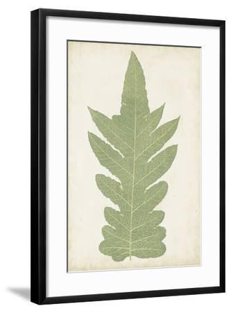 Fern Family IX-Lowe-Framed Giclee Print