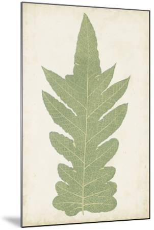 Fern Family IX-Lowe-Mounted Giclee Print