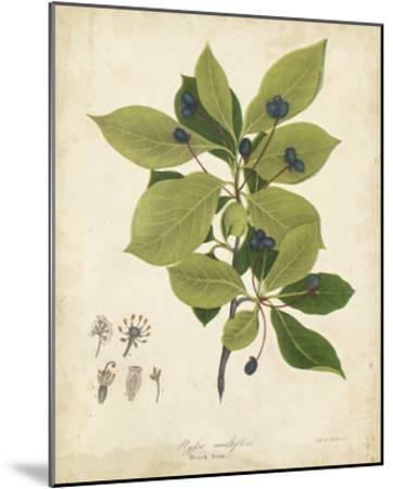 Black Gum Tree Foliage-John Torrey-Mounted Giclee Print