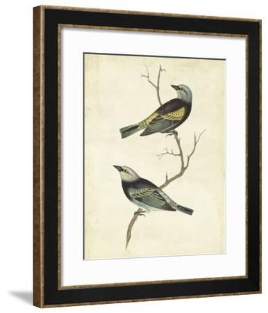 Blue-headed Tanager-Cassin-Framed Giclee Print