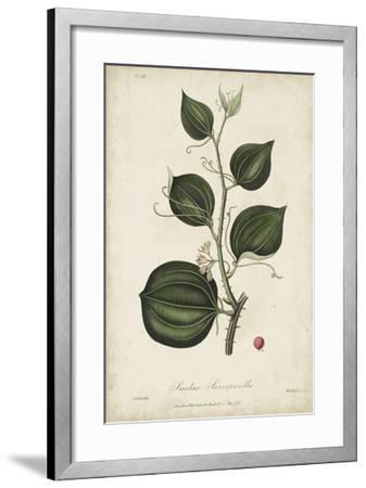 Medicinal Botany I-Churchill-Framed Giclee Print